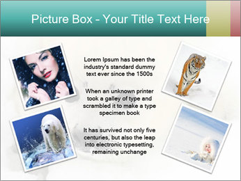 Baby harp seal pup PowerPoint Template - Slide 24