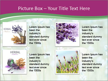 Butterfly PowerPoint Templates - Slide 14