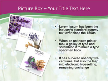 Butterfly PowerPoint Templates - Slide 17