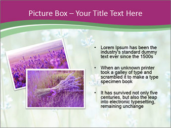 Butterfly PowerPoint Templates - Slide 20