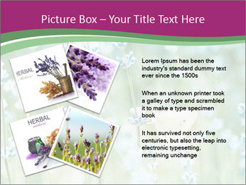 Butterfly PowerPoint Templates - Slide 23