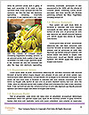 0000087481 Word Templates - Page 4