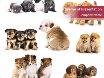 Group of Puppies PowerPoint Template - Slide 1