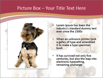 Group of Puppies PowerPoint Template - Slide 13