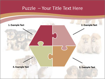 Group of Puppies PowerPoint Template - Slide 40