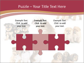 Group of Puppies PowerPoint Templates - Slide 42