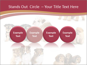Group of Puppies PowerPoint Template - Slide 76