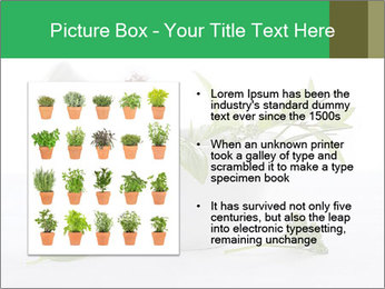 Medicinal Virtues PowerPoint Template - Slide 13