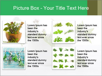 Medicinal Virtues PowerPoint Template - Slide 14