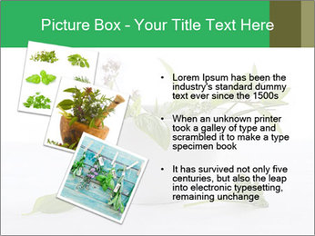 Medicinal Virtues PowerPoint Template - Slide 17