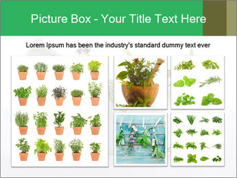 Medicinal Virtues PowerPoint Template - Slide 19
