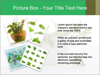 Medicinal Virtues PowerPoint Template - Slide 23