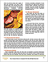 0000087507 Word Templates - Page 4
