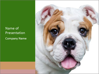 English bulldog PowerPoint Templates - Slide 1