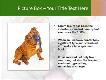 English bulldog PowerPoint Templates - Slide 13