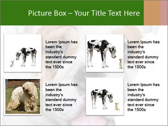 English bulldog PowerPoint Templates - Slide 14