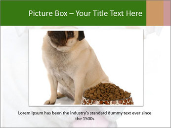 English bulldog PowerPoint Templates - Slide 15