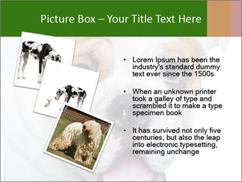 English bulldog PowerPoint Templates - Slide 17