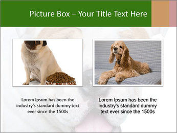 English bulldog PowerPoint Templates - Slide 18