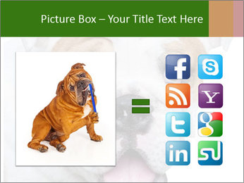 English bulldog PowerPoint Templates - Slide 21
