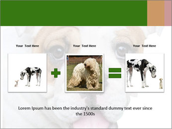 English bulldog PowerPoint Templates - Slide 22
