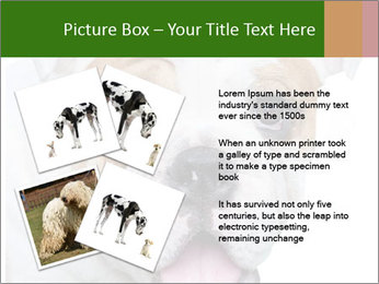 English bulldog PowerPoint Templates - Slide 23