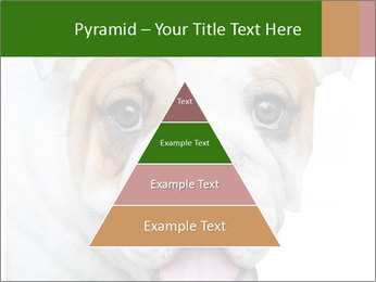 English bulldog PowerPoint Templates - Slide 30