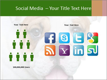 English bulldog PowerPoint Templates - Slide 5