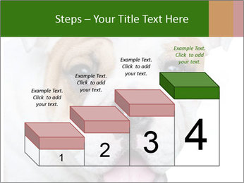 English bulldog PowerPoint Templates - Slide 64