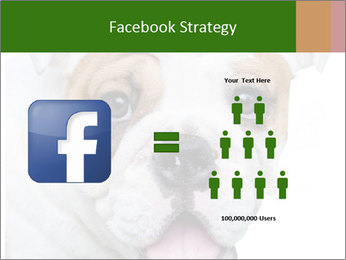 English bulldog PowerPoint Templates - Slide 7