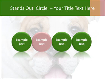 English bulldog PowerPoint Templates - Slide 76