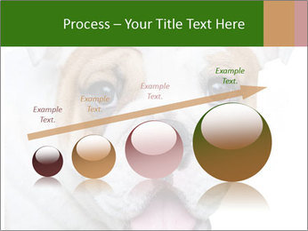 English bulldog PowerPoint Templates - Slide 87