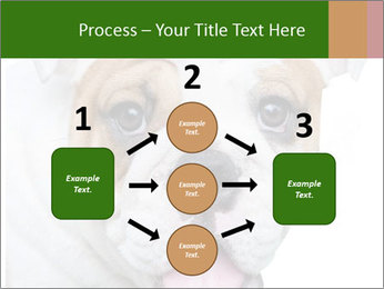 English bulldog PowerPoint Templates - Slide 92