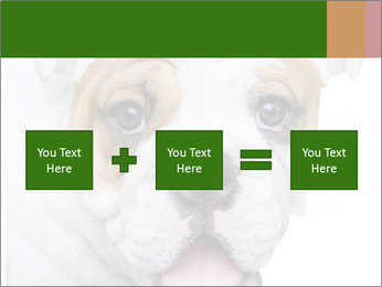 English bulldog PowerPoint Templates - Slide 95