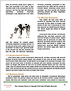 0000087516 Word Templates - Page 4