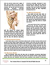 0000087544 Word Templates - Page 4