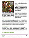 0000087548 Word Templates - Page 4