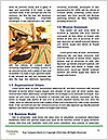 0000087582 Word Template - Page 4