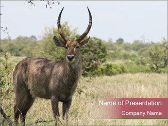 Waterbuck PowerPoint Template - Slide 1
