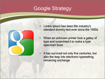 Waterbuck PowerPoint Template - Slide 10