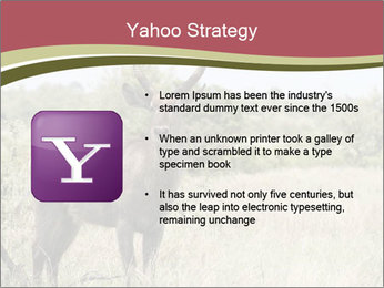 Waterbuck PowerPoint Template - Slide 11