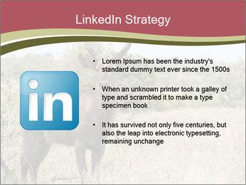 Waterbuck PowerPoint Templates - Slide 12