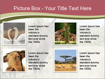 Waterbuck PowerPoint Template - Slide 14