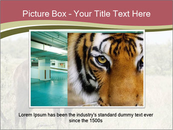 Waterbuck PowerPoint Templates - Slide 15