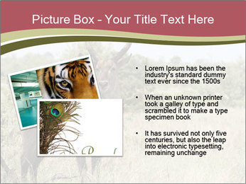 Waterbuck PowerPoint Template - Slide 20