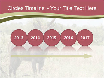 Waterbuck PowerPoint Template - Slide 29