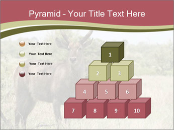 Waterbuck PowerPoint Template - Slide 31