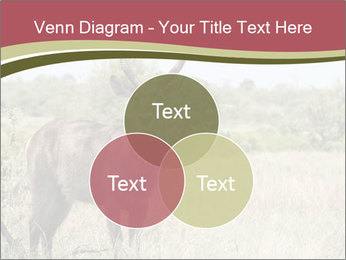 Waterbuck PowerPoint Template - Slide 33