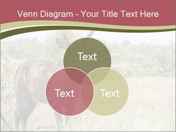 Waterbuck PowerPoint Templates - Slide 33