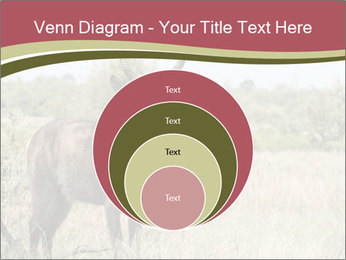 Waterbuck PowerPoint Template - Slide 34